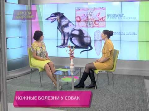 Школа здоровья 12/10/2013 Кожные болезни у собак