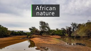Nature and wildlife sounds – dawn in the South African bush