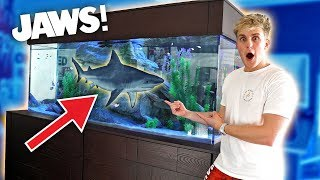 MEET MY NEW GIANT PET SHARK!!
