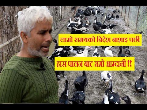 हास पालेर बिदेशमा भन्रादा राम्रो आम्दानी ।। Ducks Farming in Nepal ।। Has Palan in Nepal ।।