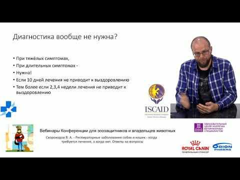 Скороходов В. А. - Респираторные заболевания собак и кошек