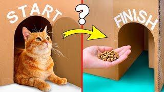 Can Your Cat Find The Exit? Lets Build A Giant Labyrinth From Cardboard!