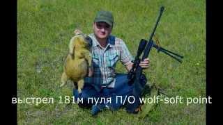 Смотреть онлайн Охота на сурка байбака