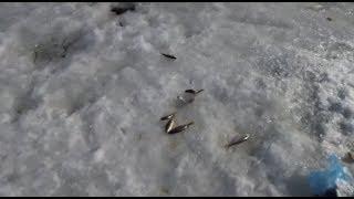 Рыбалка на реке кия хабаровский край