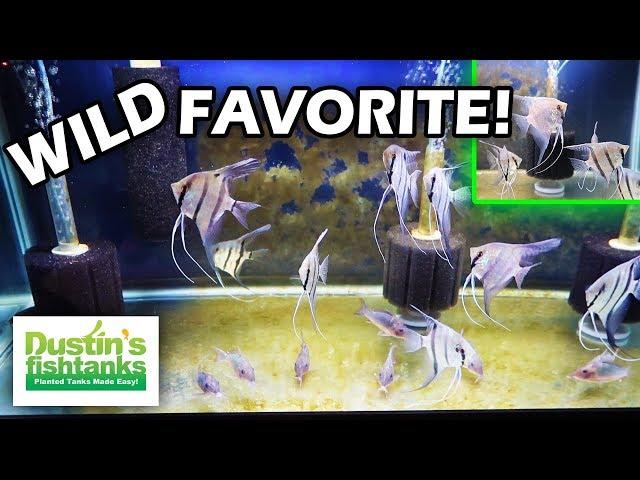 WILD CAUGHT AMAZON FISH. Dean Fishroom Visit. Aquarium Fish I've seen in the Wild.