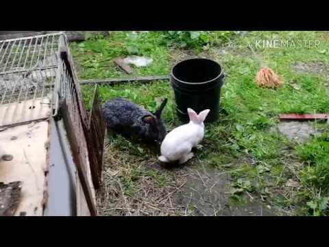 Кролики вышли на волю 🐰 🐰