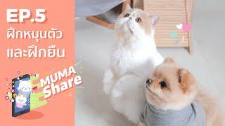 MUMA Share EP 5 : ฝึกหมุนตัวและฝึกยืน 🐶🐱