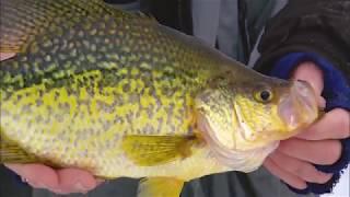 Ice Fishing Crappie Secrets