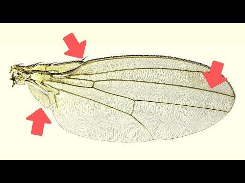 Medicamente pentru viermi pentru prevenirea viermilor