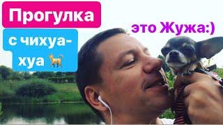 Прогулка с чихуахуа. Собачка Жужа. Walk with the chihuahua. Zuj's Dog