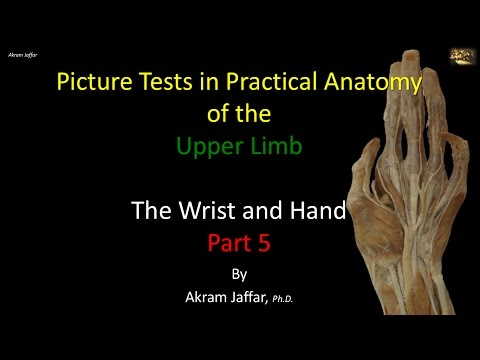 Picture Test in Anatomy Wrist and Hand 5