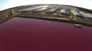 North Carolina Hog Farms Spray Manure Around Black Communities; Residents Fight Back