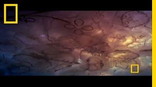 Jellyfish Invasion | Explorer