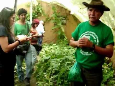 pelicula 2 cultivo de hortalizas en invernadero