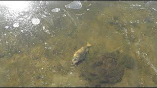 Ловля окуня в марте на речке