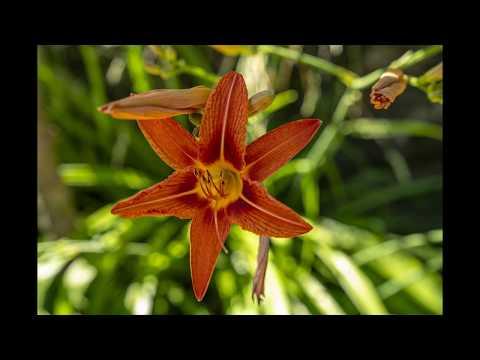 Flores de Vida juin 20