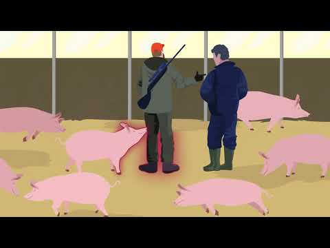 , title : 'African Swine Fever: how to stay one step ahead