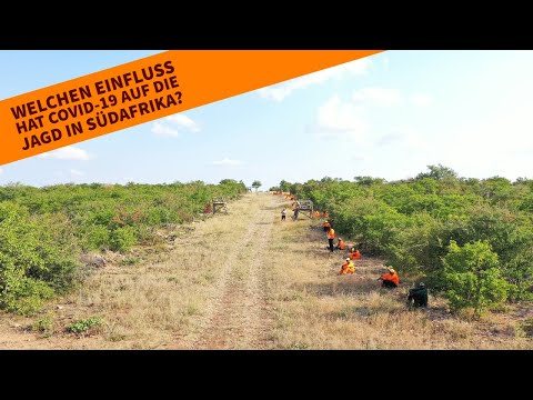 jagd-news: Mit Videos: Wie beeinflusst das Coronavirus die Jagd in Afrika? Wir berichten live von einer Drückjagd in Südafrika