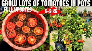 How To Grow Tomatoes At Home (SEED TO HARVEST)