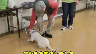 動画サムネイル:平成26年 11月に子犬コースを開催しました!!