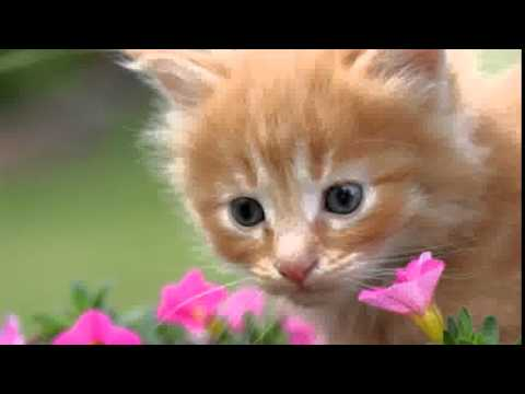 Kittens Pictures Compilation| Picture Of Kittens Best