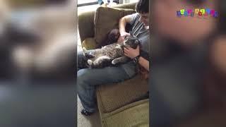 Просто приколы с котанами. Терпеливый кот.