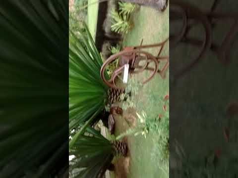 Pousada do Barão em Santa Rita do Sapucaí mg