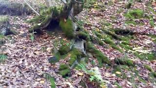 Красивые места природы. поход в лес. пешие походы в горы Beautiful places of nature