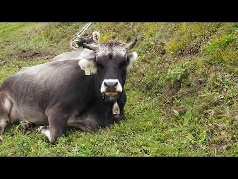 Tierwohlpreis 2019 - Regionssieger West