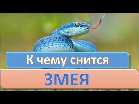 К чему снится змея | СОННИК