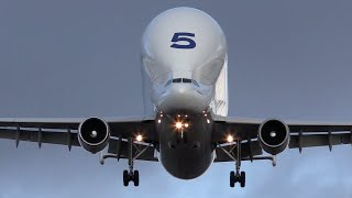 preview picture of video 'Airbus A300-600ST Beluga landing at Hawarden'