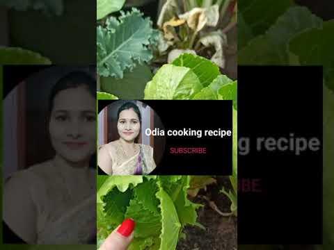 "ମୋ ରୋଷେଇ channel ""Odia cooking recipe""please ସାଙ୍ଗମାନେ subscribe କରି comment କରନ୍ତୁ କଣ video ଦେଖିବେ"