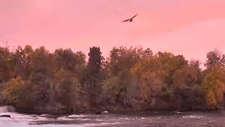 Sunset, Rainbow, Pink skies, pink gulls and pink bears at the pink falls sept 22nd 2020