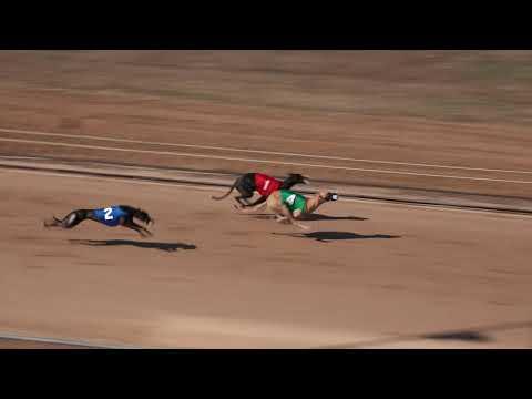Race 29