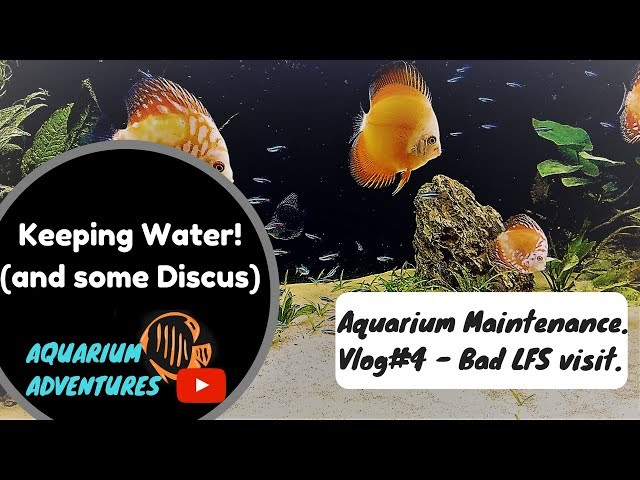 Bad LFS visit & Custom Discus Aquarium: Maintenance and Water Change.