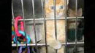 Lonely No More(Clay Aiken)-Homeless Pets 2
