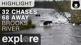 Bear 32 Chases 68 - Katmai National Park - Live Cam Highlight