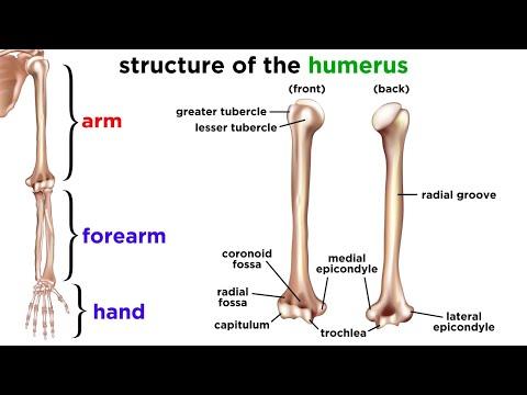 Tratamentul durerii articulare mari