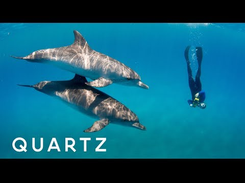 Scientists Believe Talking to Dolphins Is Possible!