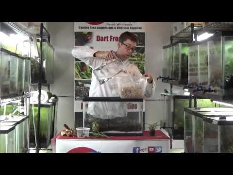 How to build a basic dart frog vivarium