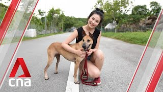 Adopt me! These rescue dogs can now live in Singapore's HDB flats | CNA Lifestyle