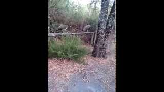 Video del alojamiento La Posada del Tietar