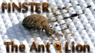 My New Mini Monster Pet Insect FINSTER The Ant Lion or Doodlebug | Star Wars Sand Larvae Are Real !!