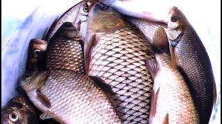 Где клюет рыба в кунгуре