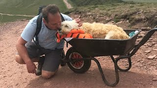 Heartbroken Man Pushes His Sick Dog In A Wheelbarrow As They Embark On One Final Journey Together
