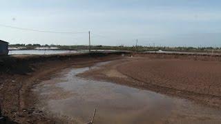 Tin Tức 24h: Hơn 1.500 ha tôm nuôi bị thiệt hại ở Kiên Giang