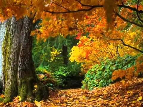 Carla Bruni - autumn