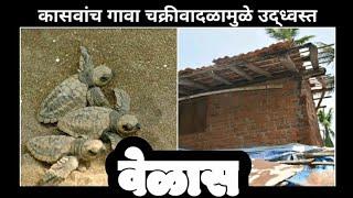 Ratnagiri News ¦ वेळास …कासवांचे गाव चक्रीवादळामुळे उद्ध्वस्त ¦ Nisarg cyclone