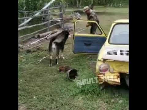 Житель Усть-Алданского района приручил волчонка