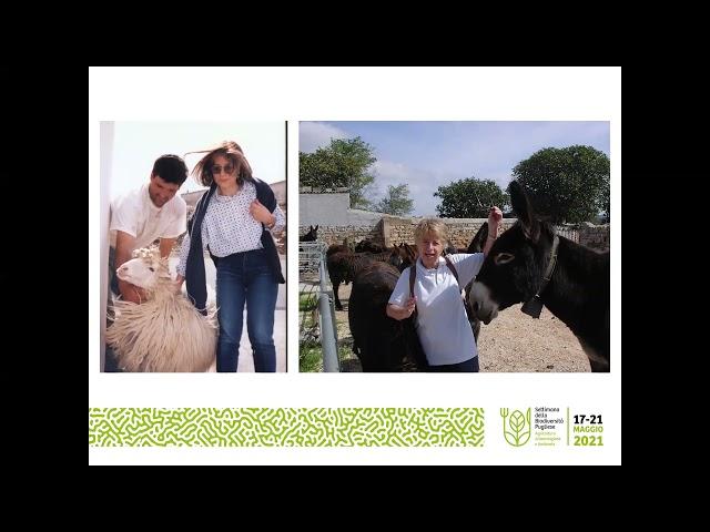 La razza ovina altamurana